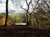bulkeley-woods