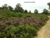 sandstone-trail-hill-walk